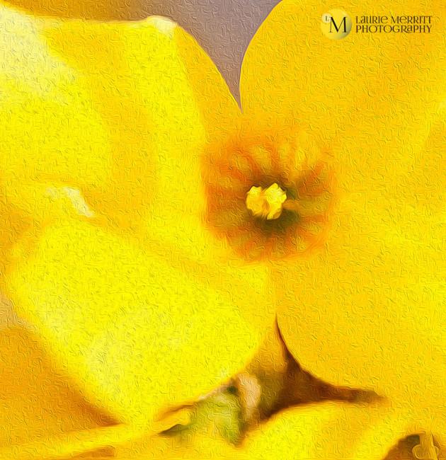 macroyard-9754_oil_2