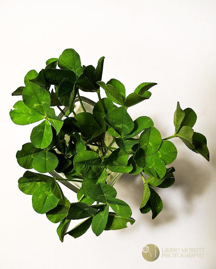 4-leafclovers-9582_900