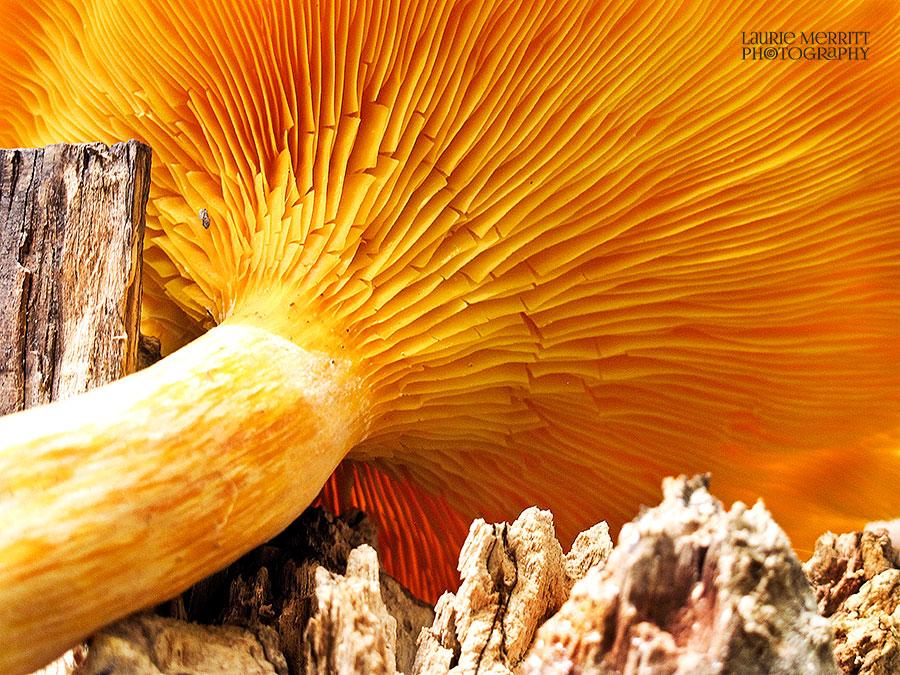 OrangeMushrooms-9536_900