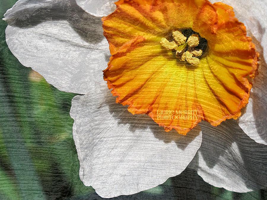 SpringDogs-0434_texture_900