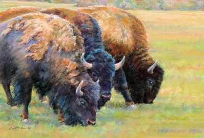 bison quartet
