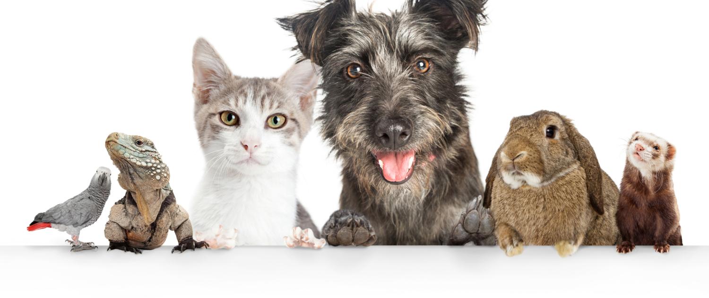 Domestic Pets Erie