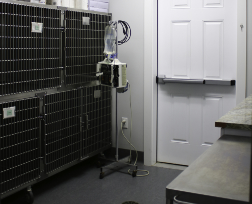 Glenwood Pet Hospital Isolation Room