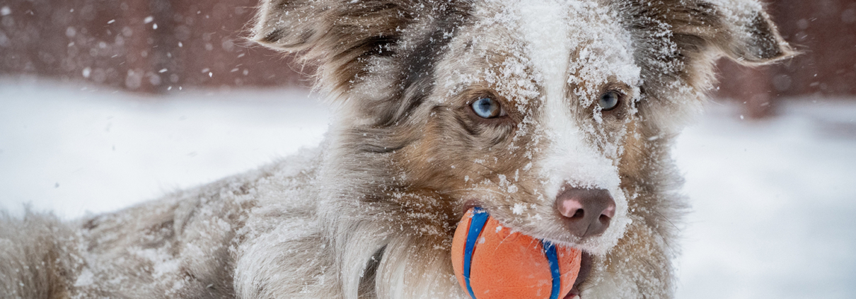 dog with ball in snow