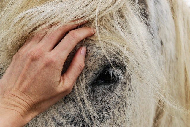 equine services options