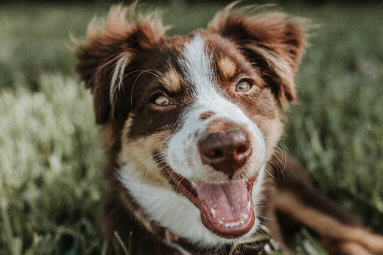 5 Dog Dental Care Tips For a Healthy Mouth