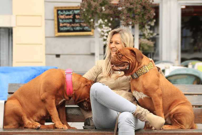 Pet-Friendly Cities