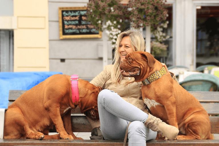 Pet Friendly Cities dog