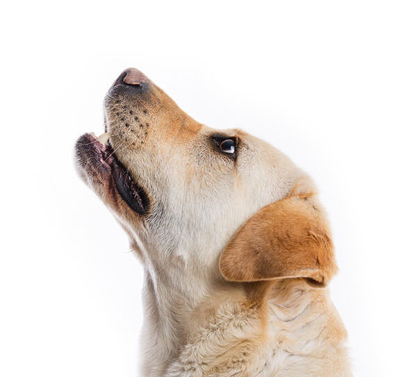 margate animal hospital our services