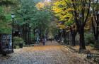 22 dazzling photos of Locust Walk