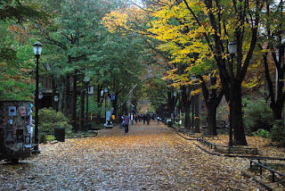 22 dazzling photos of Locust Walk