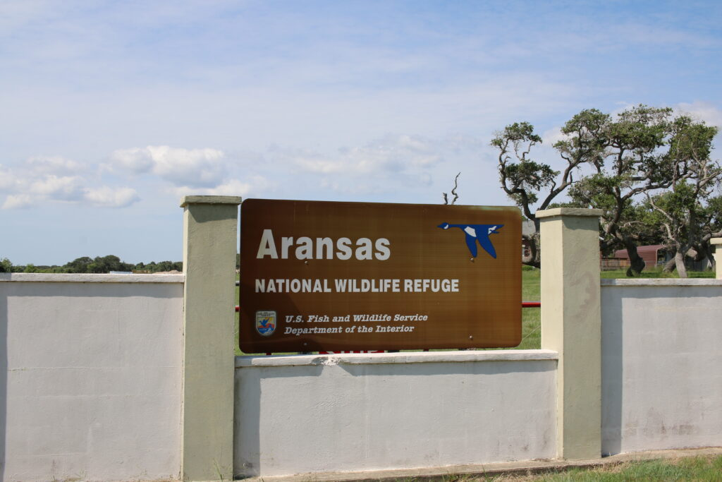 Take a trip to the Aransas National Wildlife Refuge
