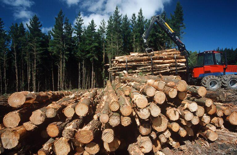 logging insurance