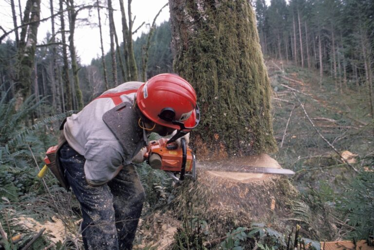 wood cutters insurance