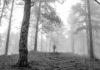 Boy In The Fog