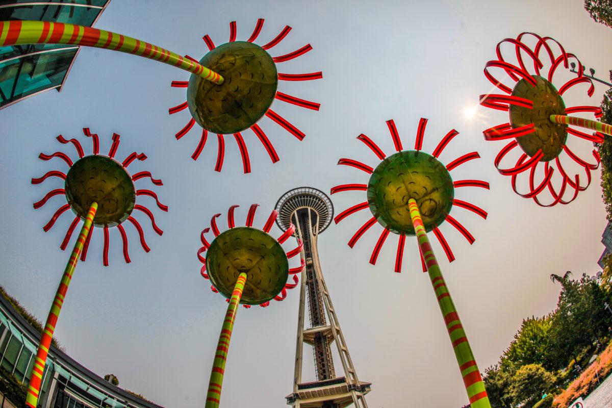 Sonic Bloom Sunflowers in Seattle
