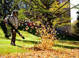 Fall Yard Clean Up Keyser WV