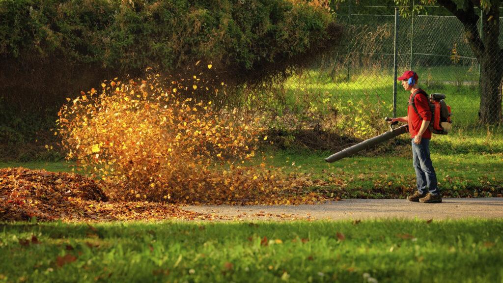 Leaf Removal Keyser WV