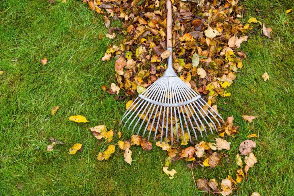 Autumn Clean Up Keyser WV