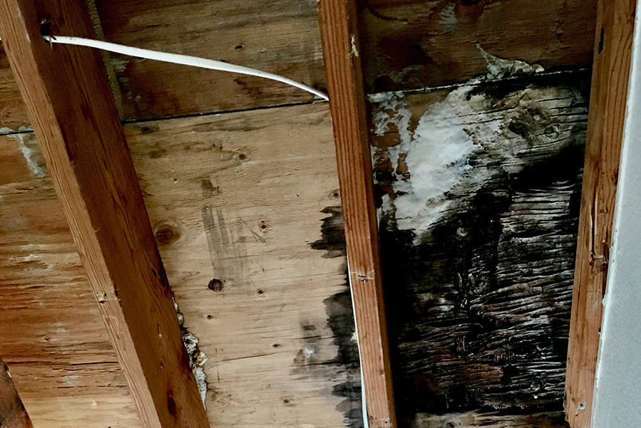 Dry Rot: What Is It and How To Prevent It