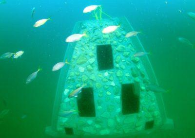 fish_underwater_reef