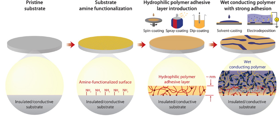 Adhering wet conducting polymers on diverse substrates