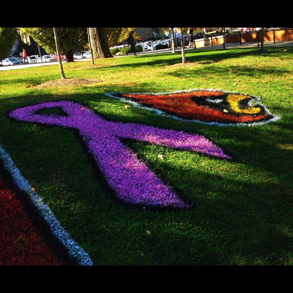 Breast cancer ribbon painted on the Pryzbyla Lawn by Colleges Against Cancer.