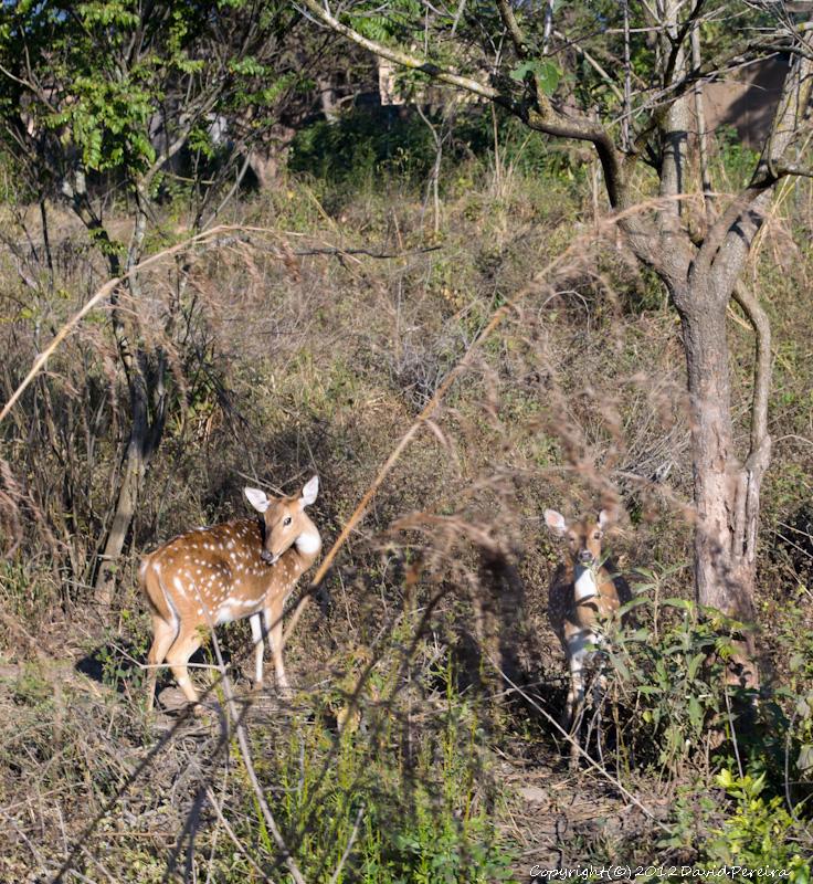 Wild Life, Corbett Tiger Reserve, Nature, National Parks