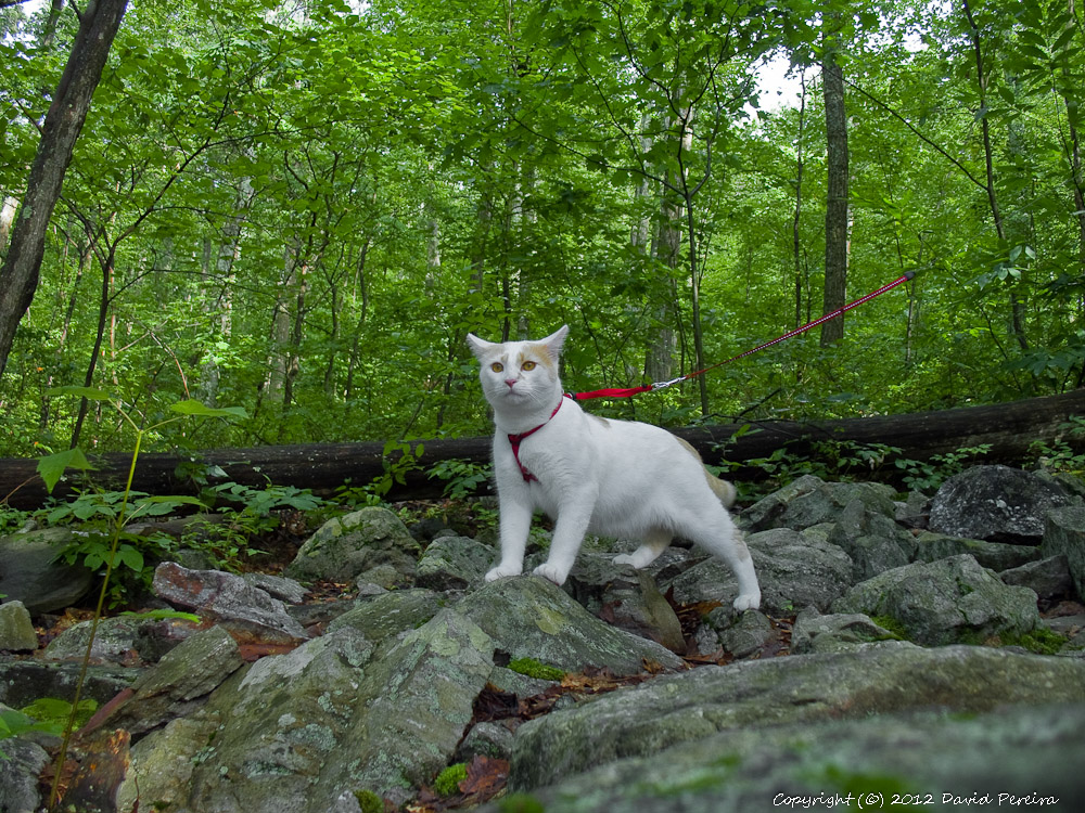 Photogenic and Fearless Hiking Cat