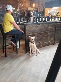 Dog Friendly Show