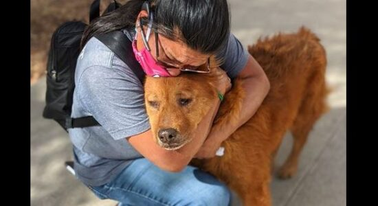 Lost Dog Reuniting With Owner