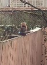 Woman Finds Squirrel Holding a Knife in her Backyard