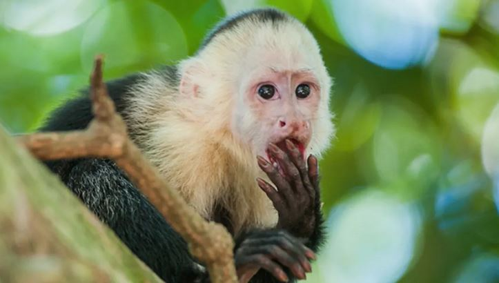Researchers Watch In Disbelief as Adorable Monkeys Turn Cannibalistic