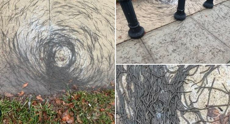 "Mysterious ""Worm Tornado"" Terrifies New Jersey Residents"