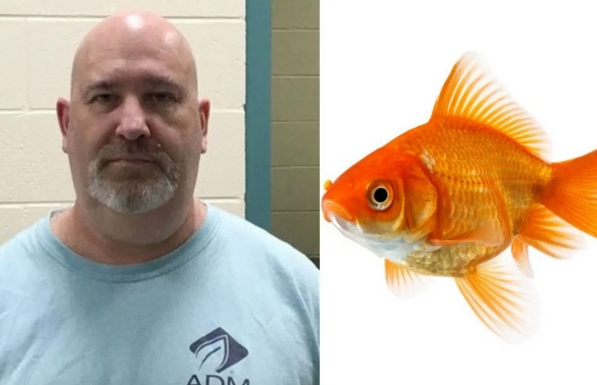 Man Charged With Animal Cruelty After Abandoning His Pet Fish