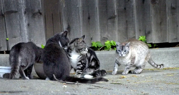 Firefighter Attacks Woman for Feeding Stray Cats