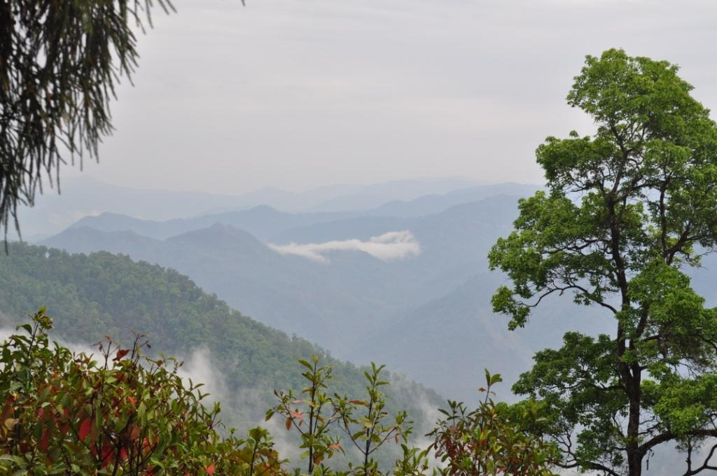 THE IRRESISTIBLE VIEW FROM LATPANCHAR FOREST