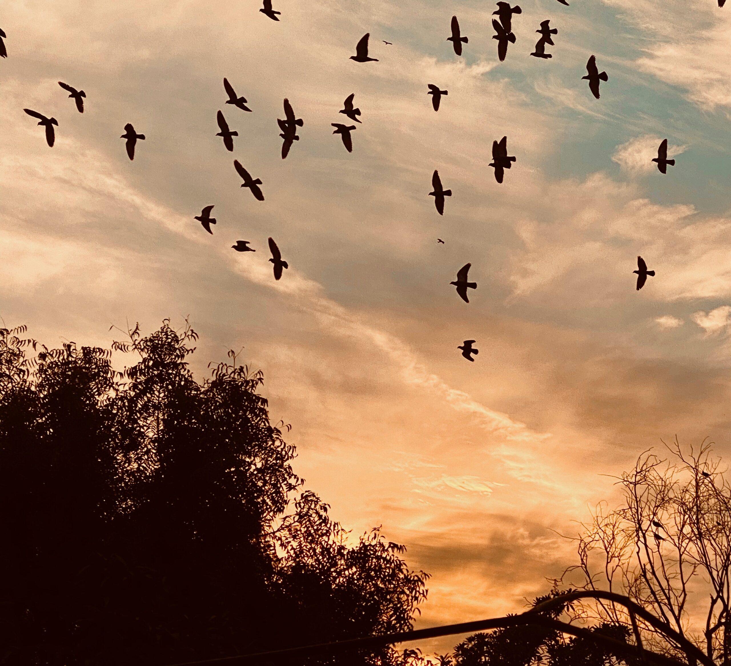 When The Birds Came Home