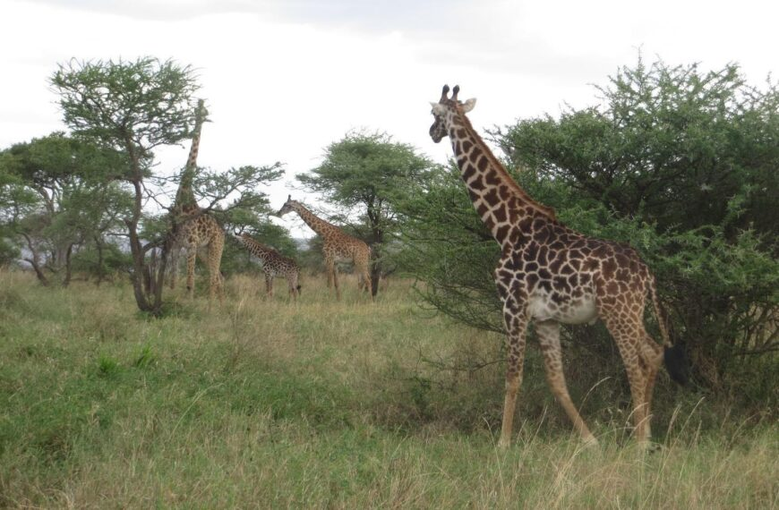 Tanzania: That place is who you are