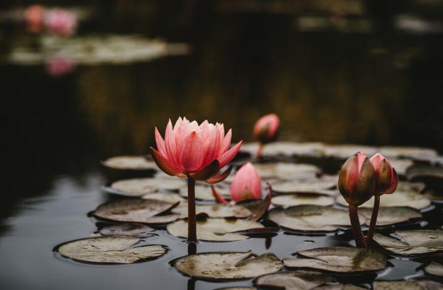 Yoga Nidra: Deep Rest For Inner Peace