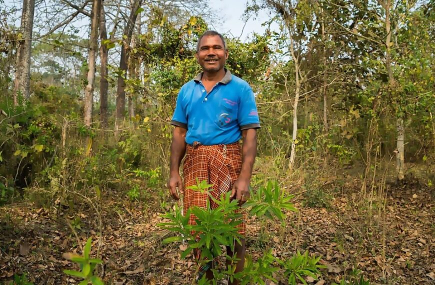 The Man Who Planted A Forest