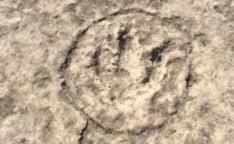 Dinosaur tracks, Leander, Texas