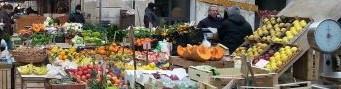 Citrus in Sicily