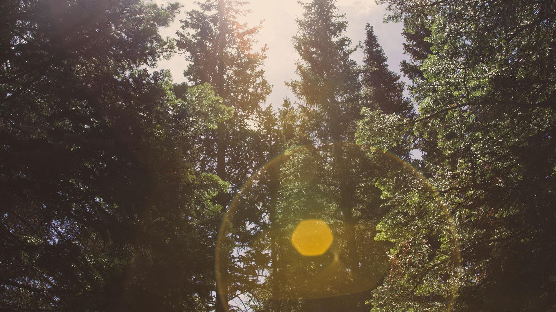Craven-Media-Light-Through-Trees