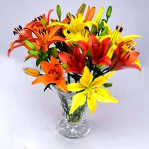 20 Multi-colored Asiatic Lilies