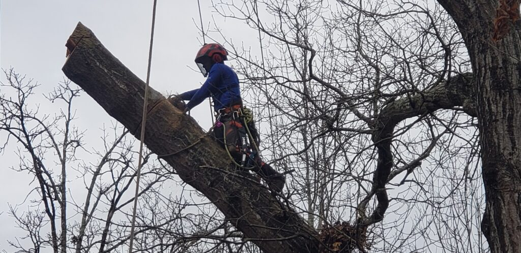 North Georgia Arbor - removing tree in sections 2