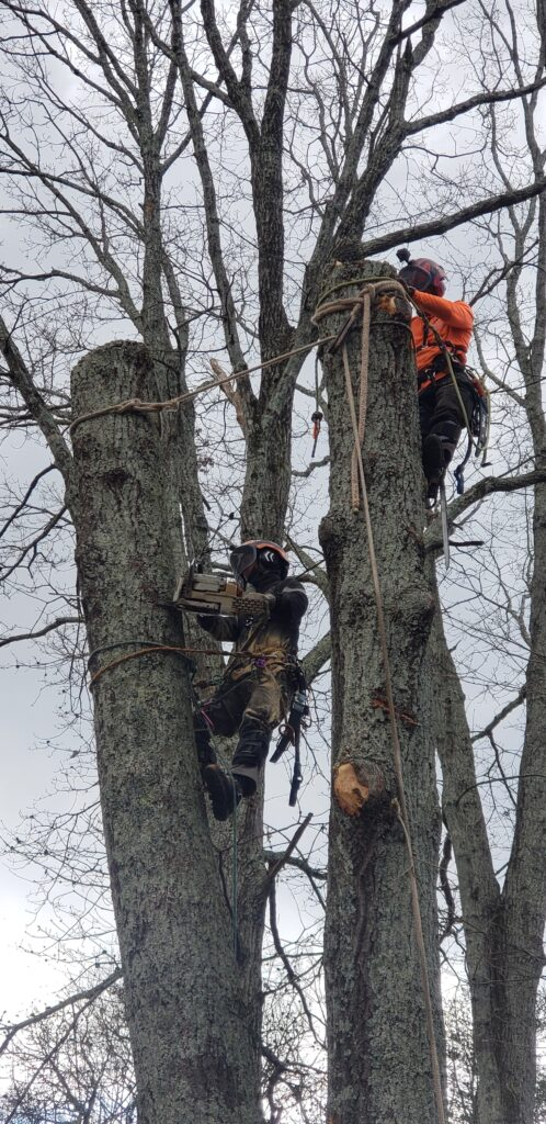 North Georgia Arbor - removing tree in sections