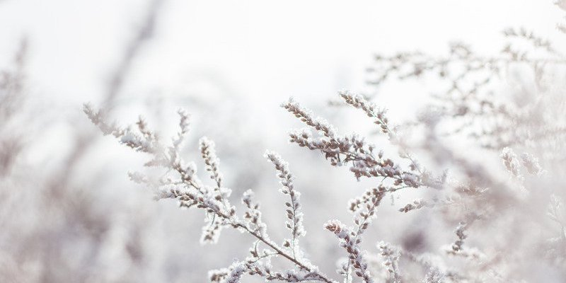 winter tree branch covered in snow