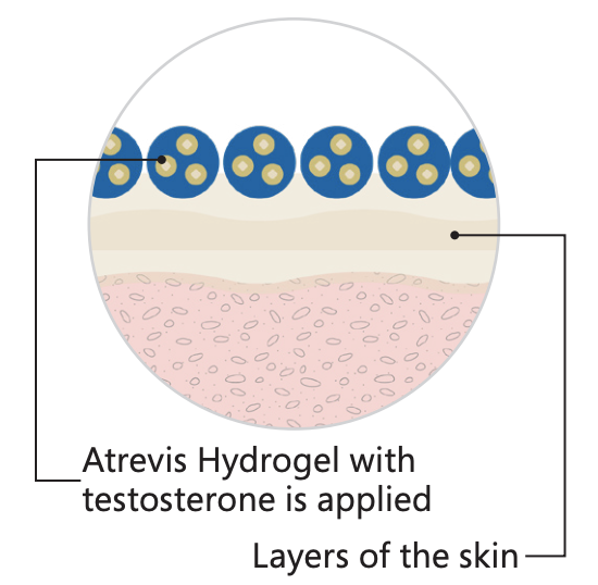 step one of how our testosterone cream base works to deliver the medication across the skin barrier in transdermal prescriptions