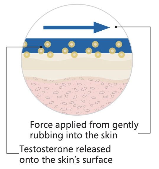 step two of how our testosterone cream base works to deliver the medication across the skin barrier in transdermal prescriptions
